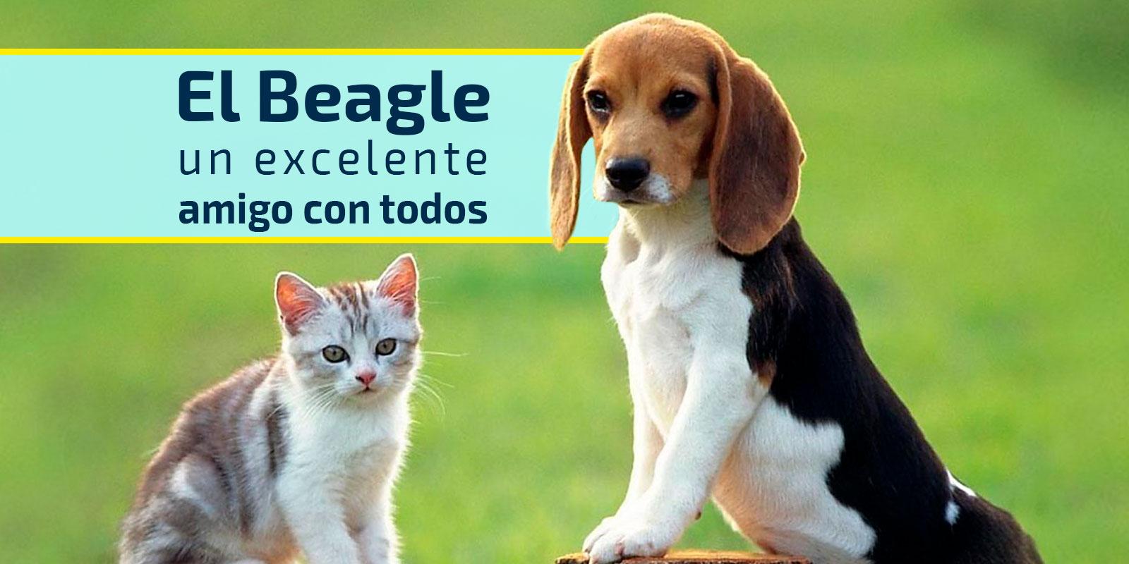 el mejor amigo de los niños, el beagle